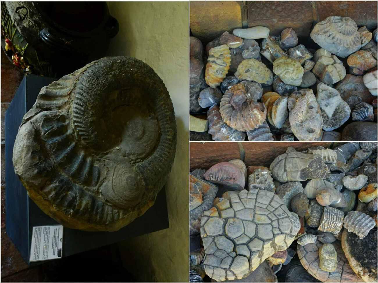 fossiles et ammonite