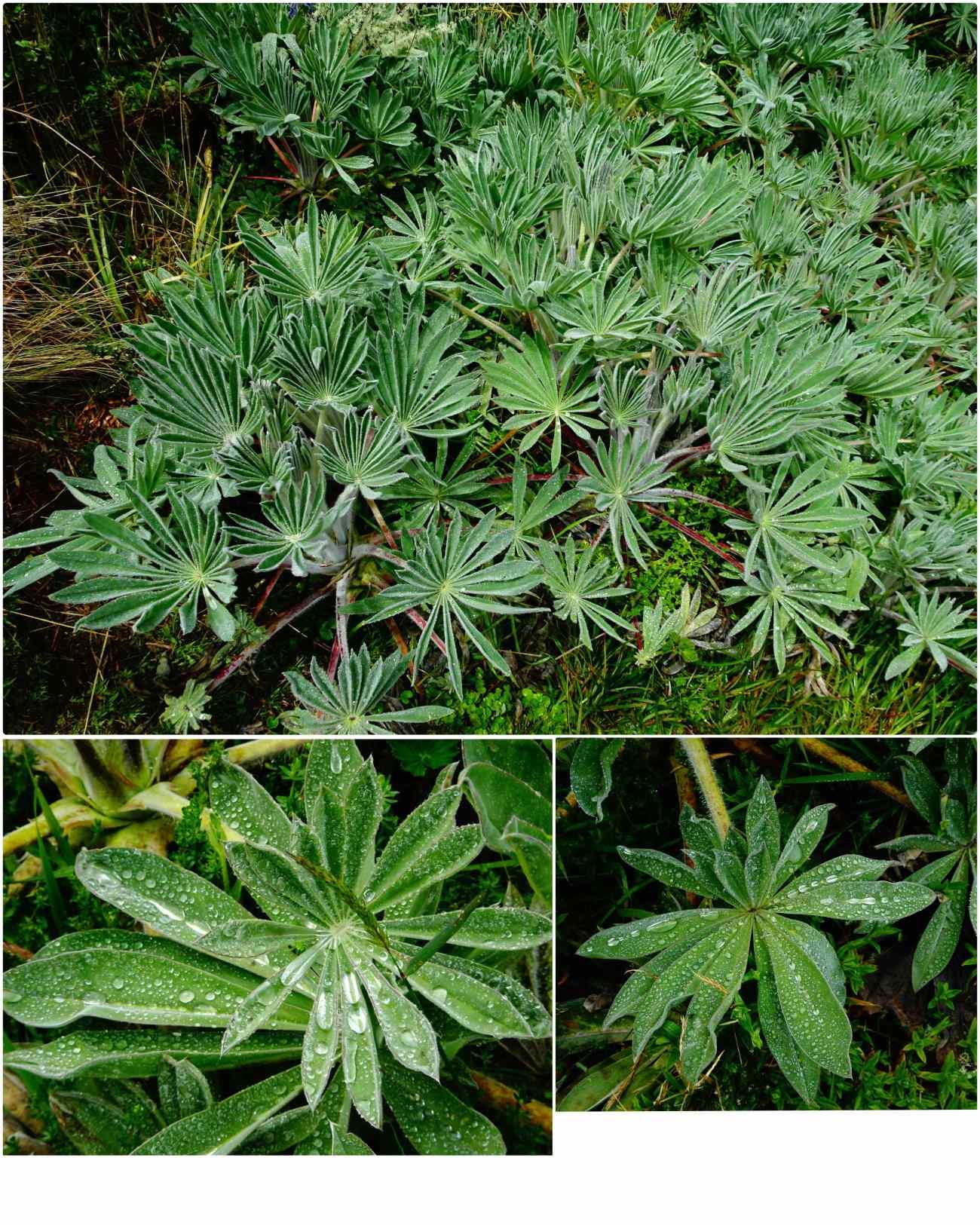 Oceta plante retient eau