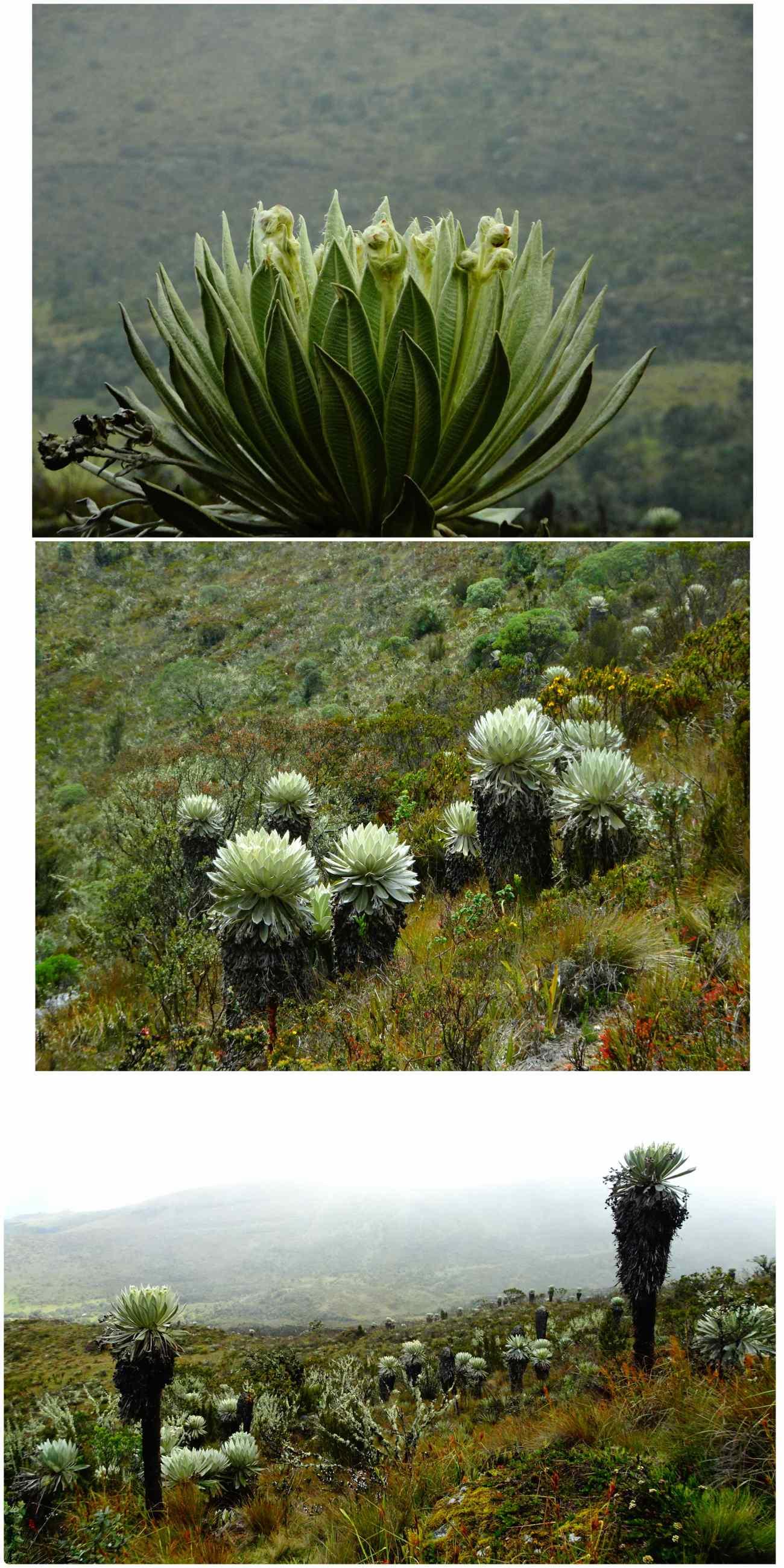 Oceta fleurs ancestrales