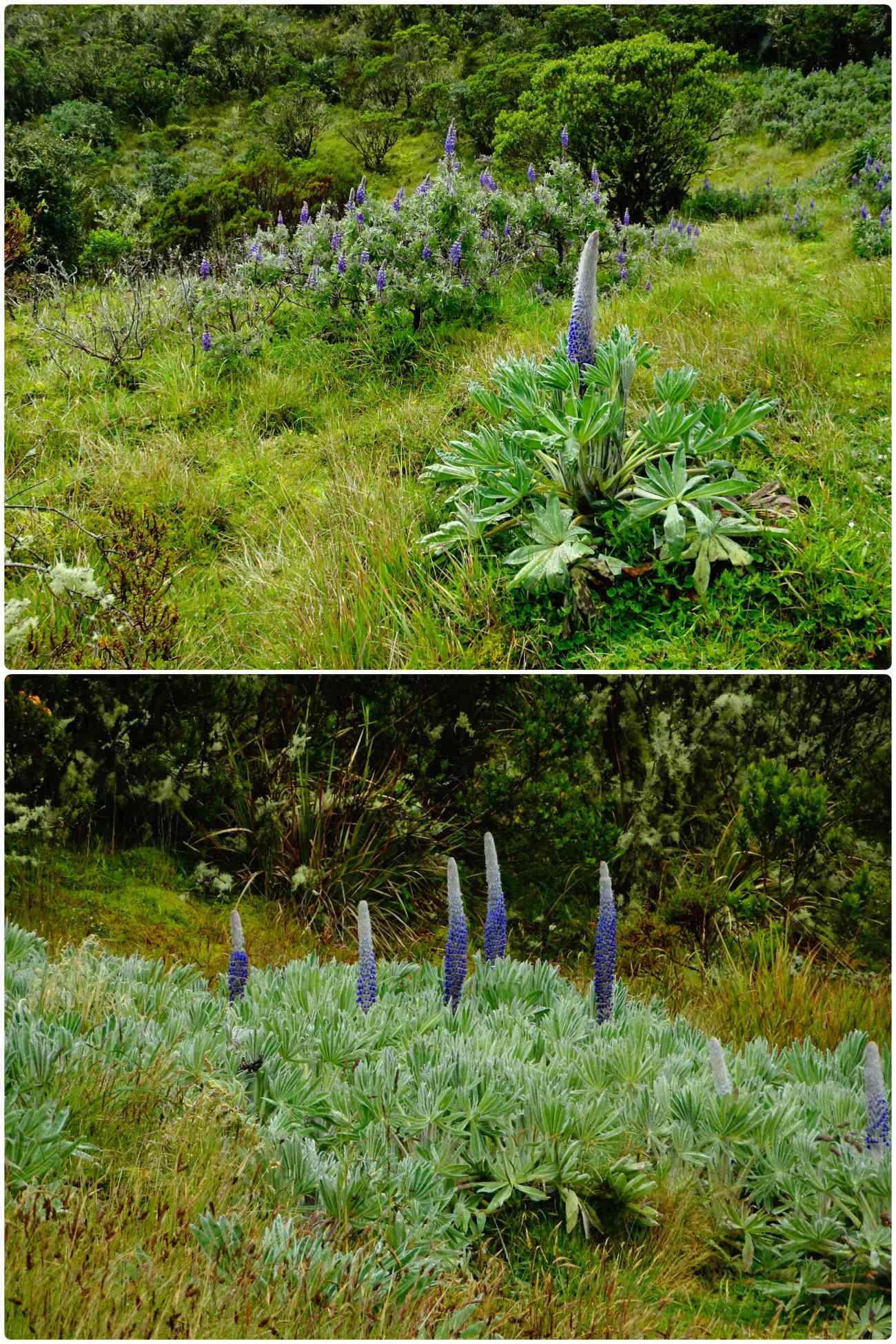 Oceta fleurs violettes