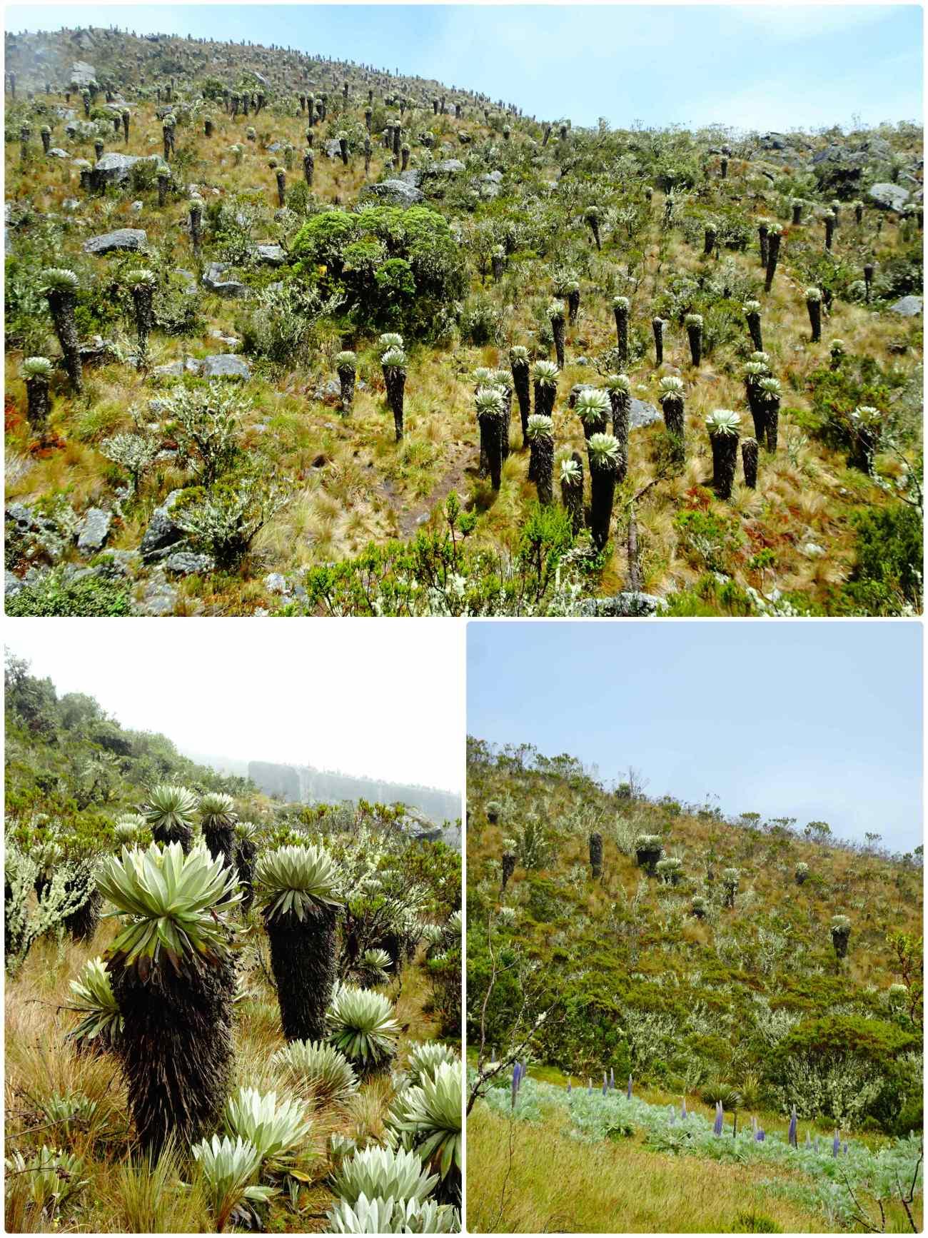 Oceta paysage fleurs ancestrales