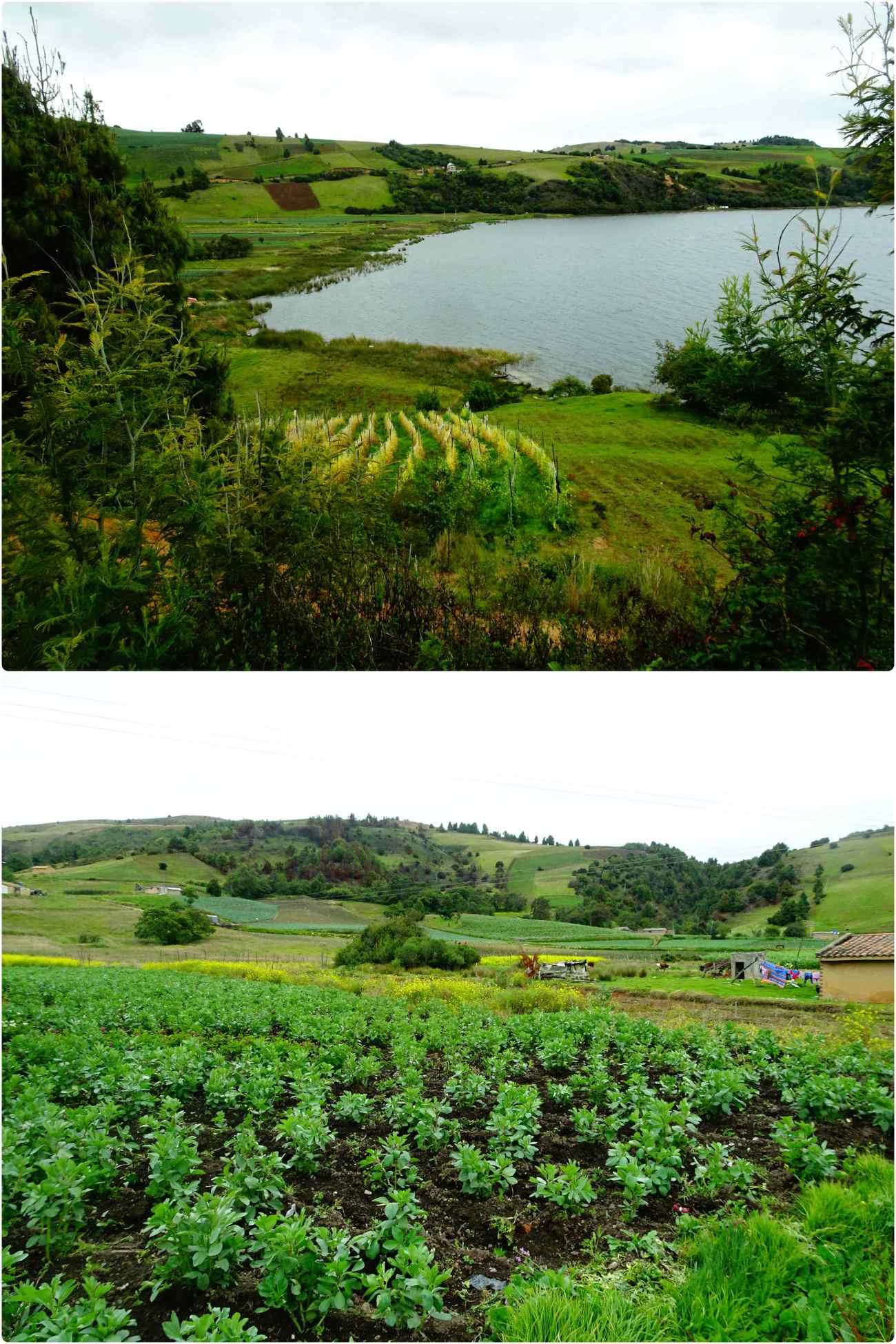 Tota fields 5