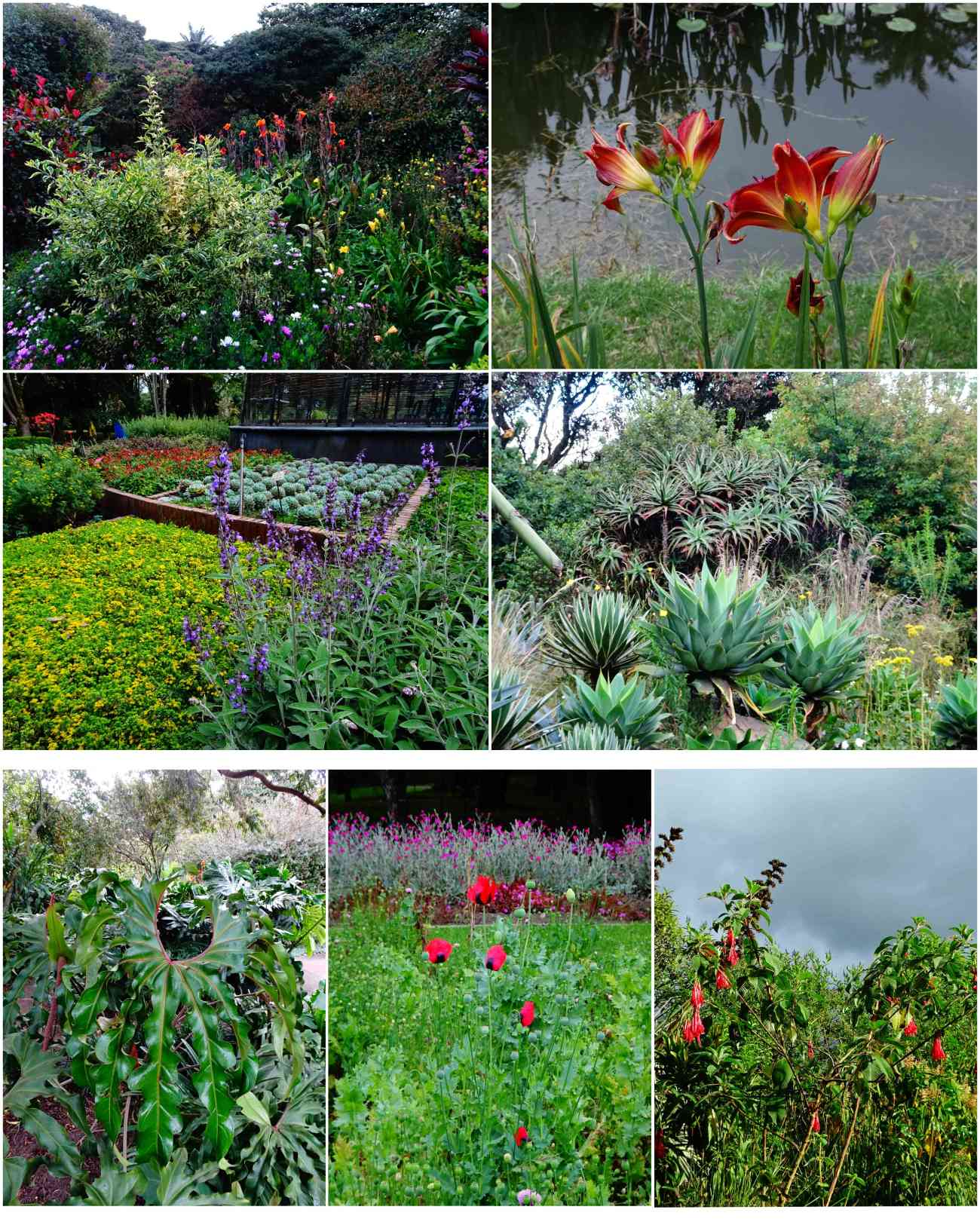 Bogota_jardinbotanico5